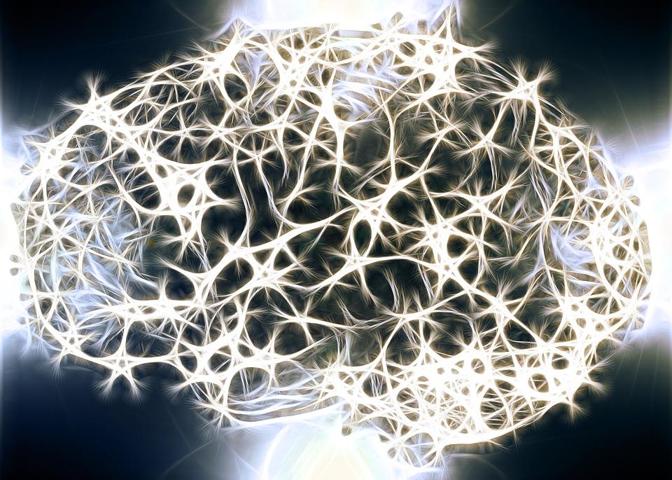 Neurônios, Células Do Cérebro, Estrutura Do Cérebro