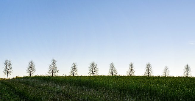 Trees, Nature, Outdoor, Sky, Pano, Line