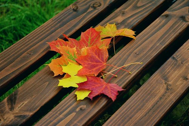 Free Photo Fall Foliage Maple Leaves Free Image On
