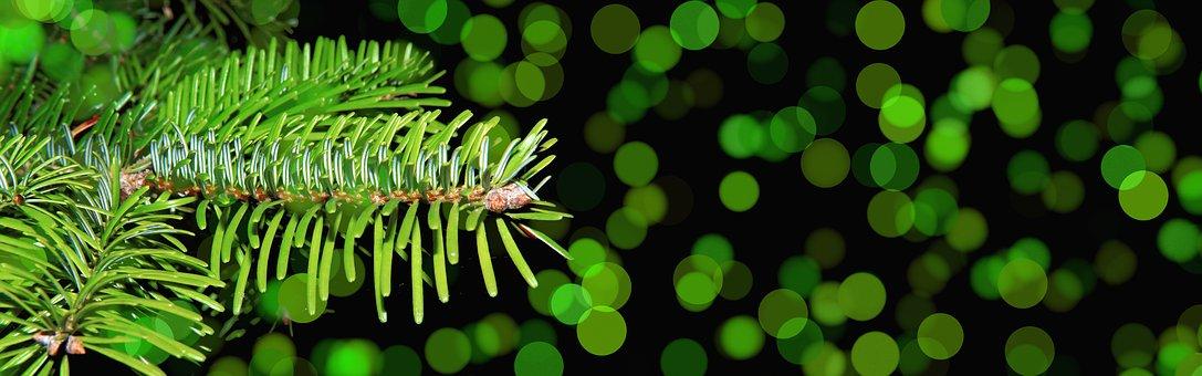 Weihnachtsbilder Tannenzweig.300 Kostenlose Tannenzweig Und Weihnachten Bilder Pixabay