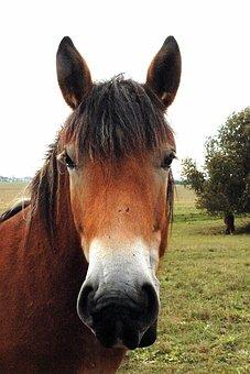 νεαρό άλογο απευθείας DVD δωρεάν πορνό