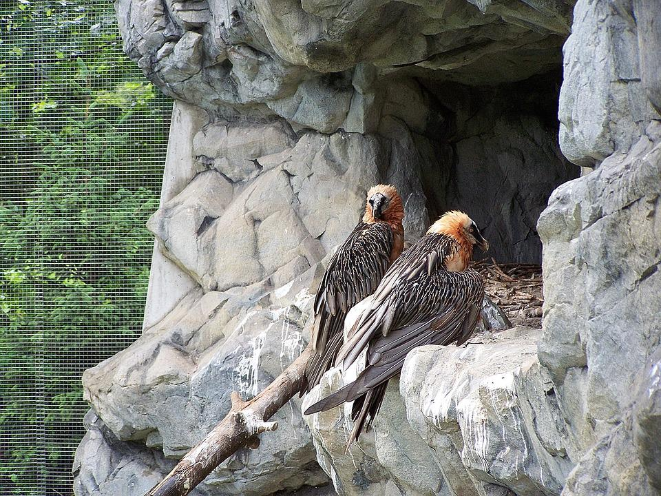 Alpine Zoo in Innsbruck