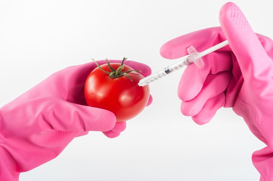 Growing vegetables indoors for beginners