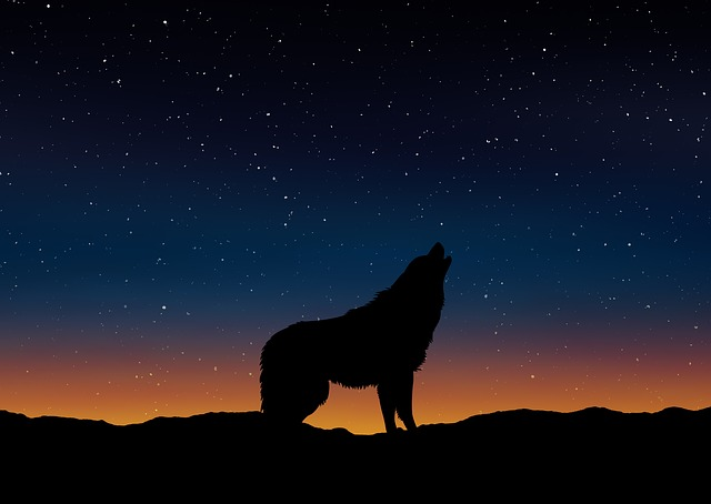 Wolf Silhouette Landscape 183 Free Image On Pixabay