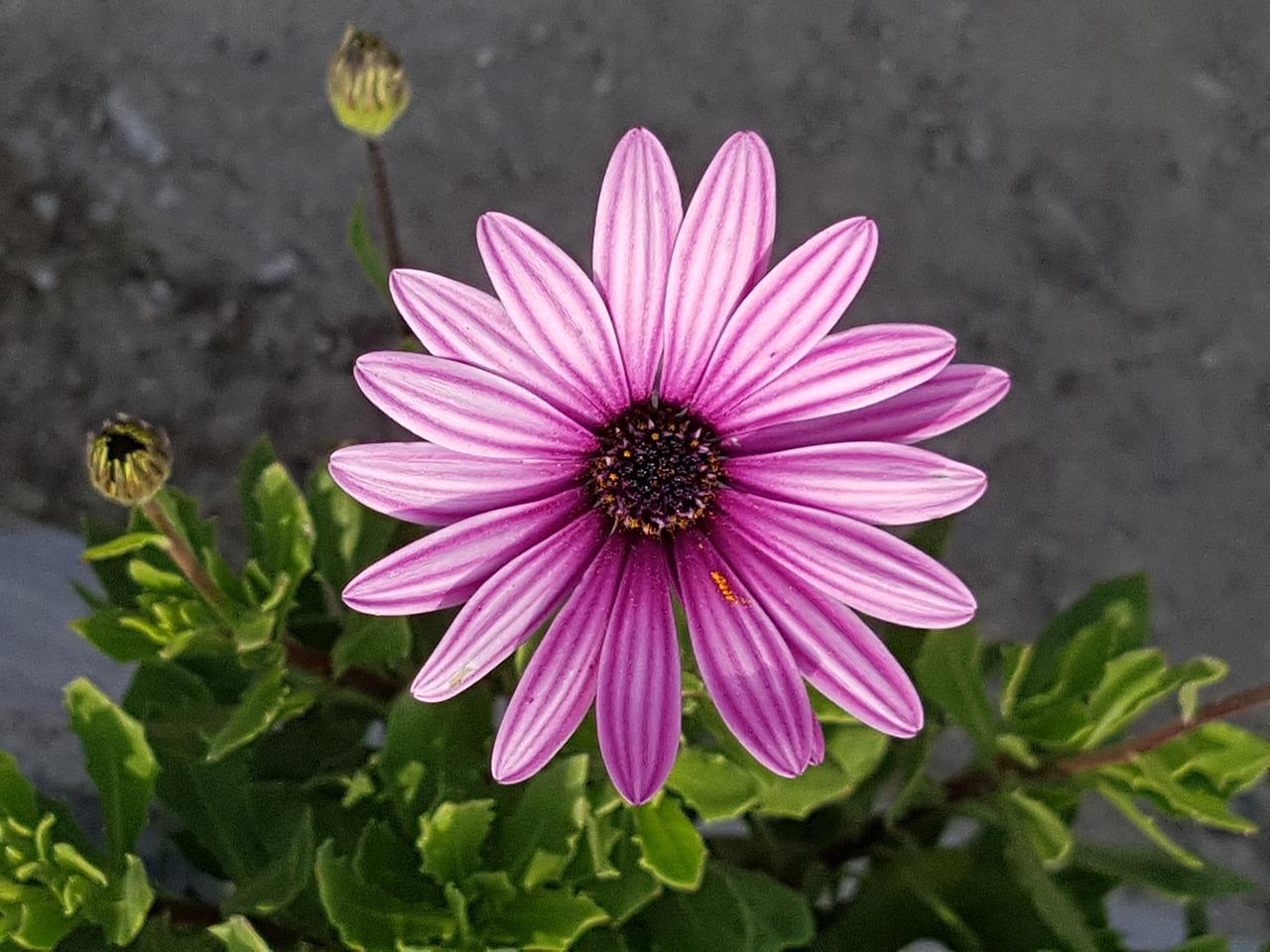фото цветов маленьких размеров венок