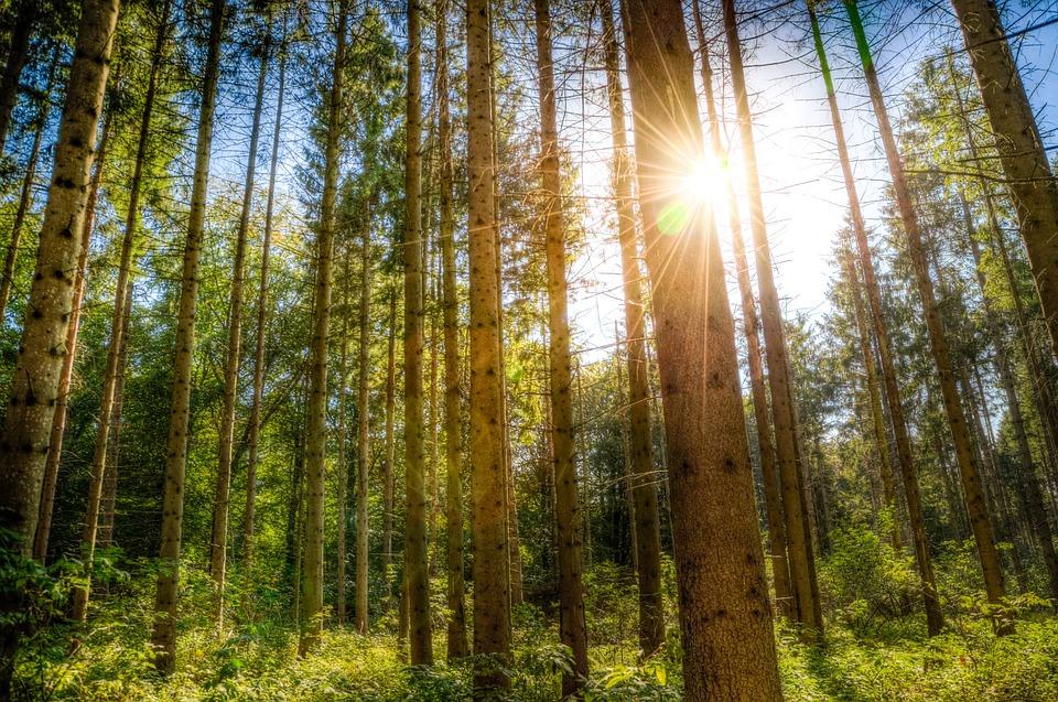 forest sunlight trees blue 183 free photo on pixabay