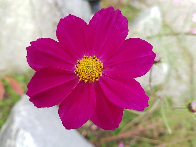 가을 가을꽃 무료사진 · Pixabay의 무료 사진