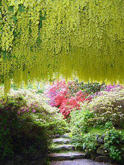 Bodnant Gardens Laburnam Poisonous Arch Na