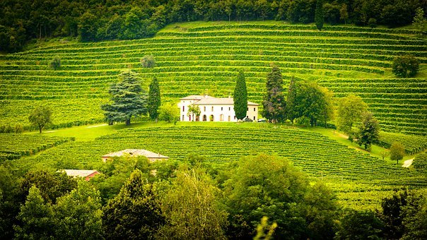 Italy, Winery, Vines, Vineyard