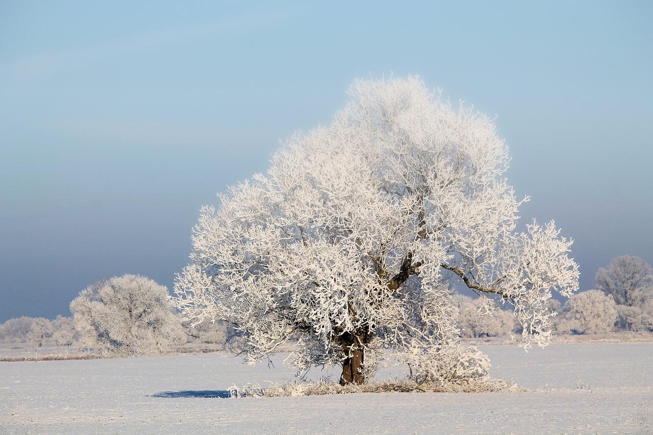 Картинки о зимних деревьев