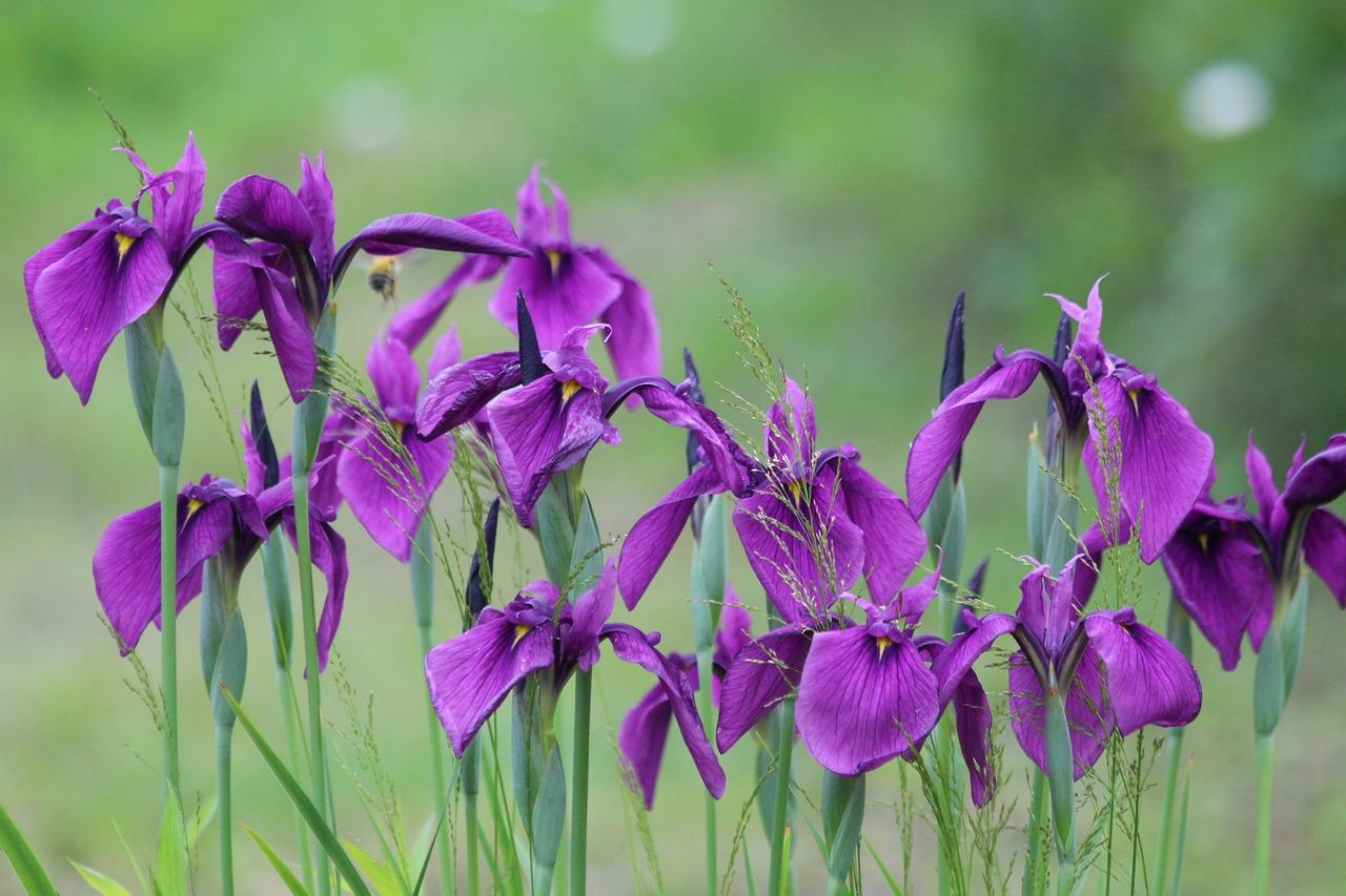 Iris images photography omaha