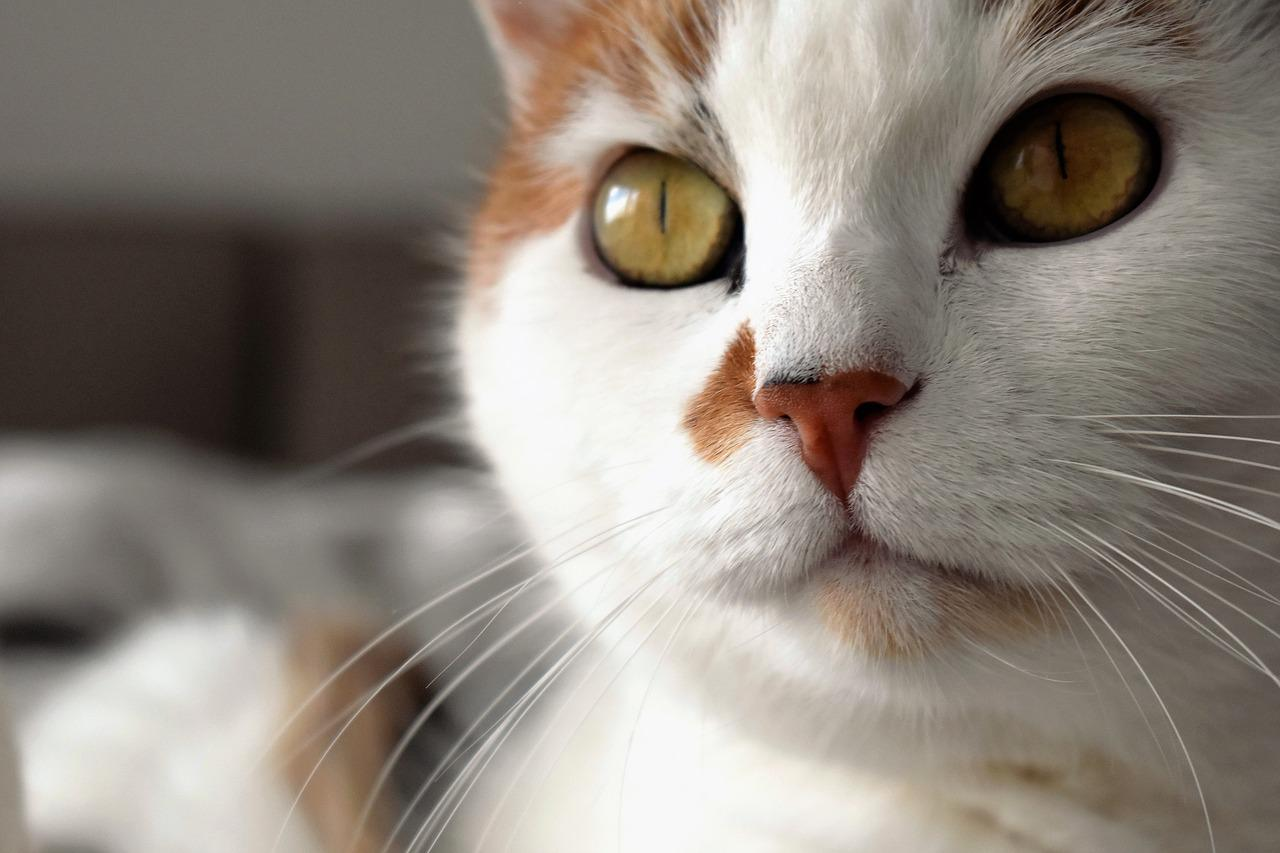 Cat anxiety signs and symptoms
