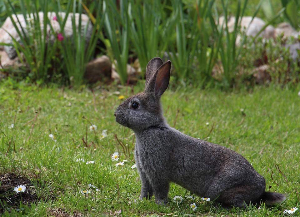 How much exercise does a rabbit need