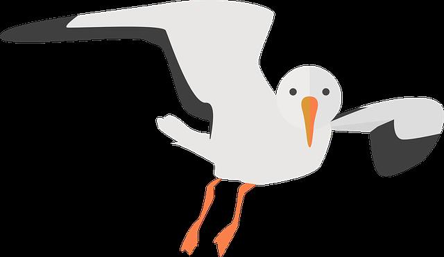 Free vector graphic: Seagull, Animal, Water Bird, Nature ...
