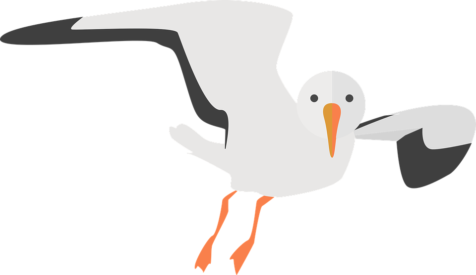 Seagull Animal Water Bird - Free vector graphic on Pixabay