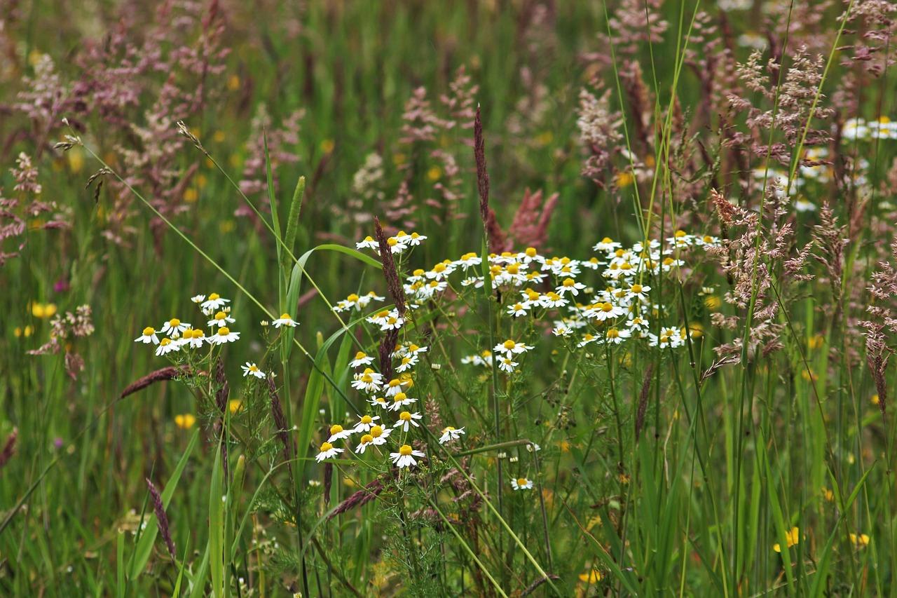трава на лугу названия картинки любого