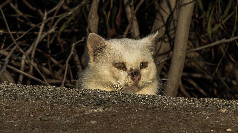 Kucing, Nyasar, Terluka, Takut, Tersembunyi, Tidak Aman