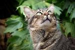 kot, wygląd, oczy