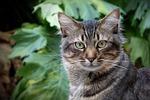 kot, feline, kocie spojrzenie