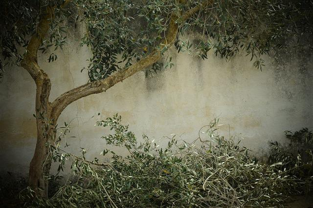 Olive Tree Nostalgia Background 183 Free Photo On Pixabay