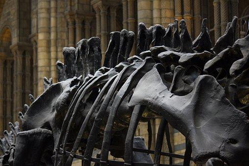 Dinosaur - Free images on Pixabay