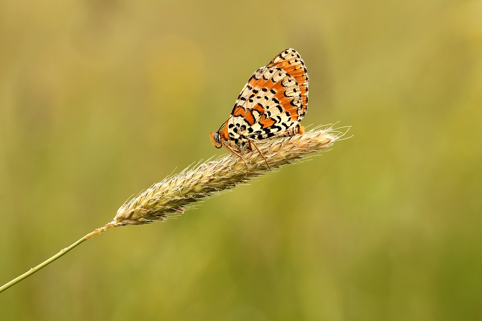 butterfly free images on pixabay