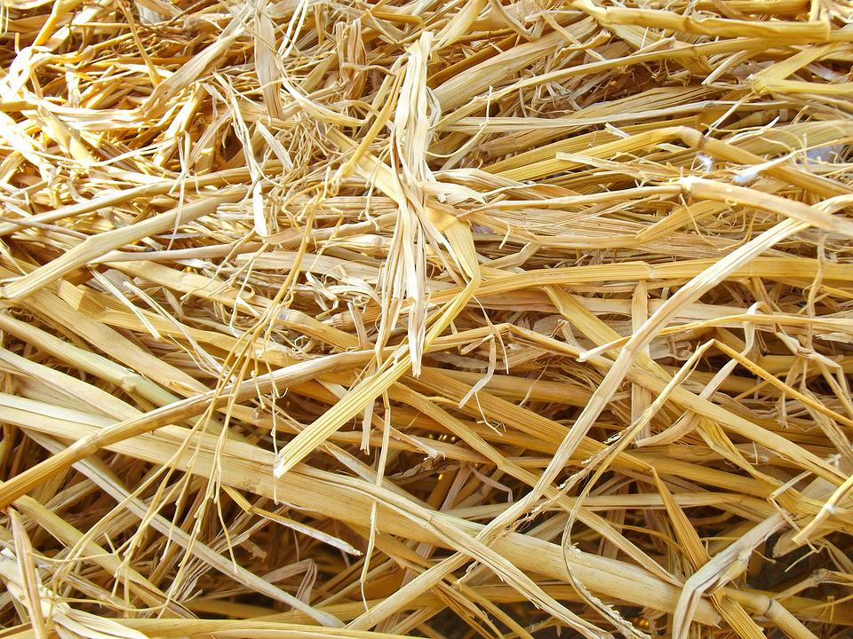 hay dried up natural free photo on pixabay