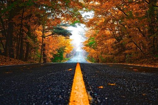 Outono, Rua, Lane, Queda, Floresta