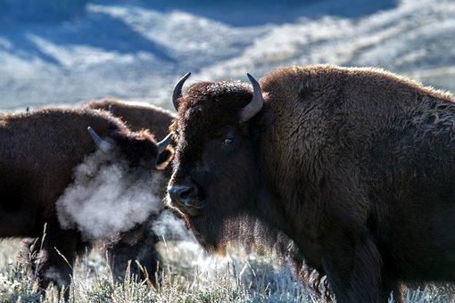 Parque Nacional de Yellowstone, Wyoming, Estados Unidos
