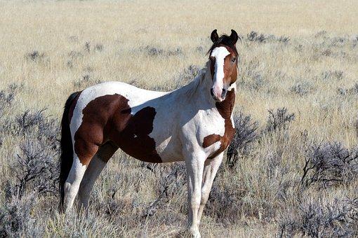Wild Horses Wild Mustangs Mustangs Horses