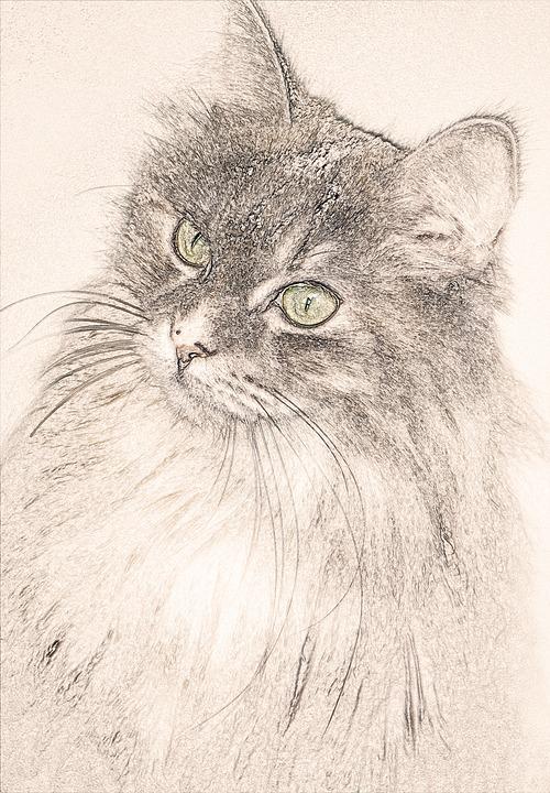 Kocka Kresleni Manto Obrazek Zdarma Na Pixabay