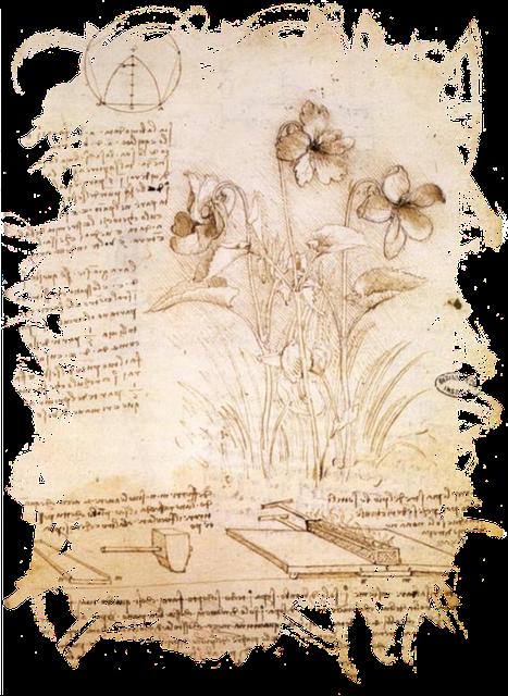 free illustration  leonardo da vinci  da vinci  flower - free image on pixabay