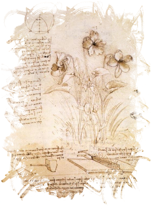 free illustration leonardo da vinci da vinci flower