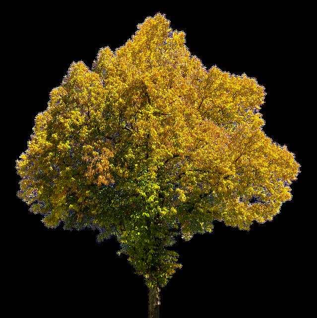 kostenloses foto herbst jahreszeit baum bl tter kostenloses bild auf pixabay 1763719. Black Bedroom Furniture Sets. Home Design Ideas
