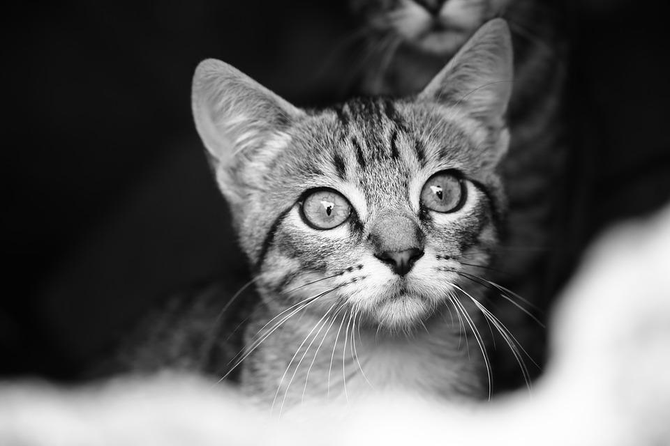 Cats Street Black And White Free Photo On Pixabay