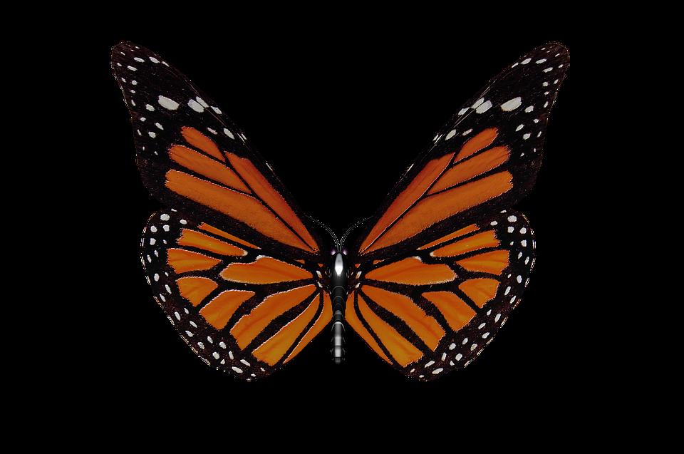 papillon ailes de jardin ailes de papillon insecte - Image De Papillon