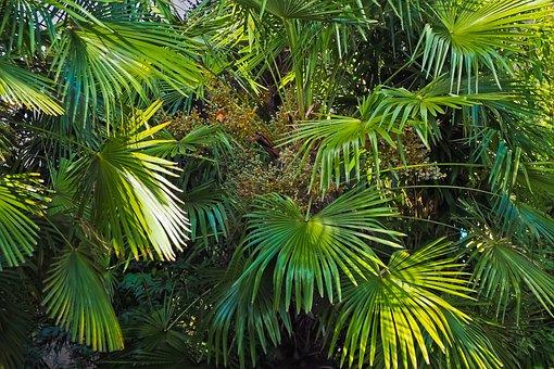 Palmeras, Selva, La Naturaleza, Paisaje