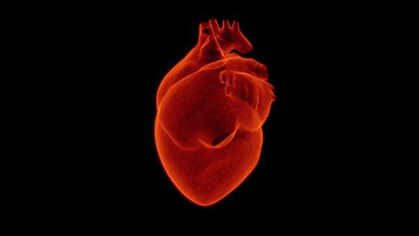 Corazón, Médica, De Salud, Cardiología
