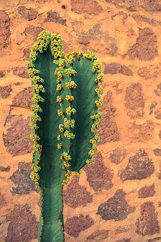 Cactus, Mexico, Brickwall, Verde