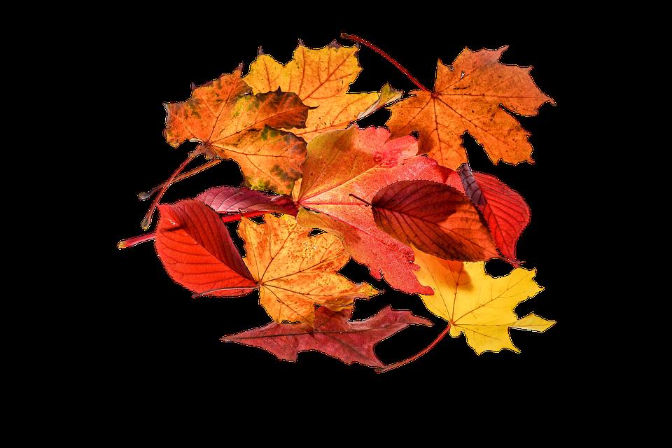 Autumn leaves leaf free photo on pixabay - Descargar autumn leaves ...
