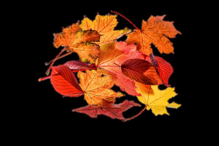 Февраля, картинки осенних листьев на прозрачном фоне