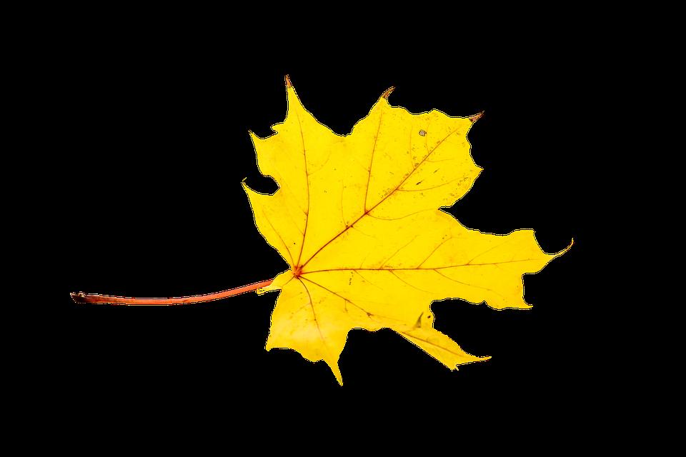 Fall, Leaves, Leaf, Transparent, Autumn Color