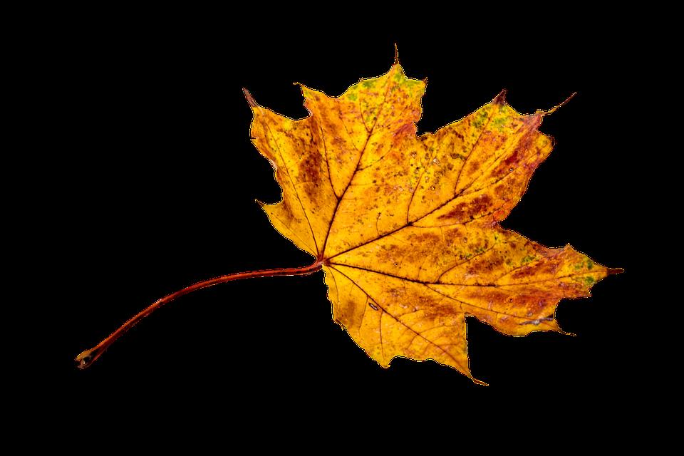 Herbst laub blatt kostenloses foto auf pixabay - Descargar autumn leaves ...
