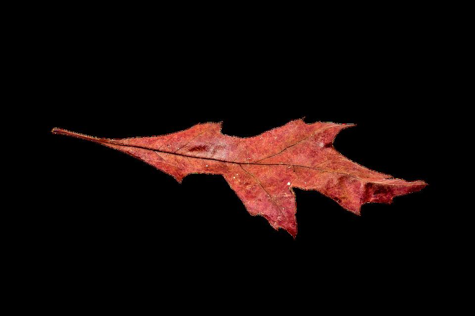 Autumn Leaves Leaf · Free photo on Pixabay