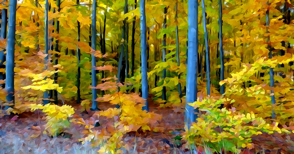 forest autumn watercolor free image on pixabay forest autumn watercolor free image