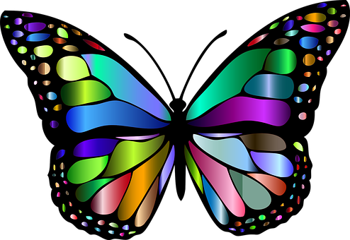Butterfly Images Pixabay Download Free Pictures