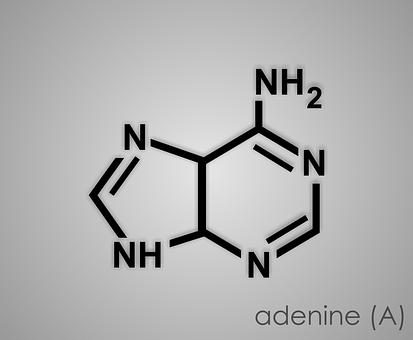 Adenine, Purine, Gout, Rna, Acid