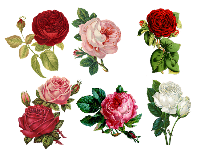 Roses Collage Vintage · Free Image On Pixabay