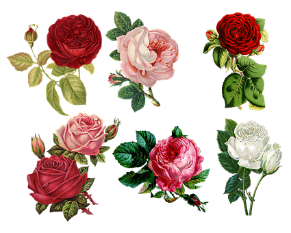 Roses, Collage, Vintage, Antique