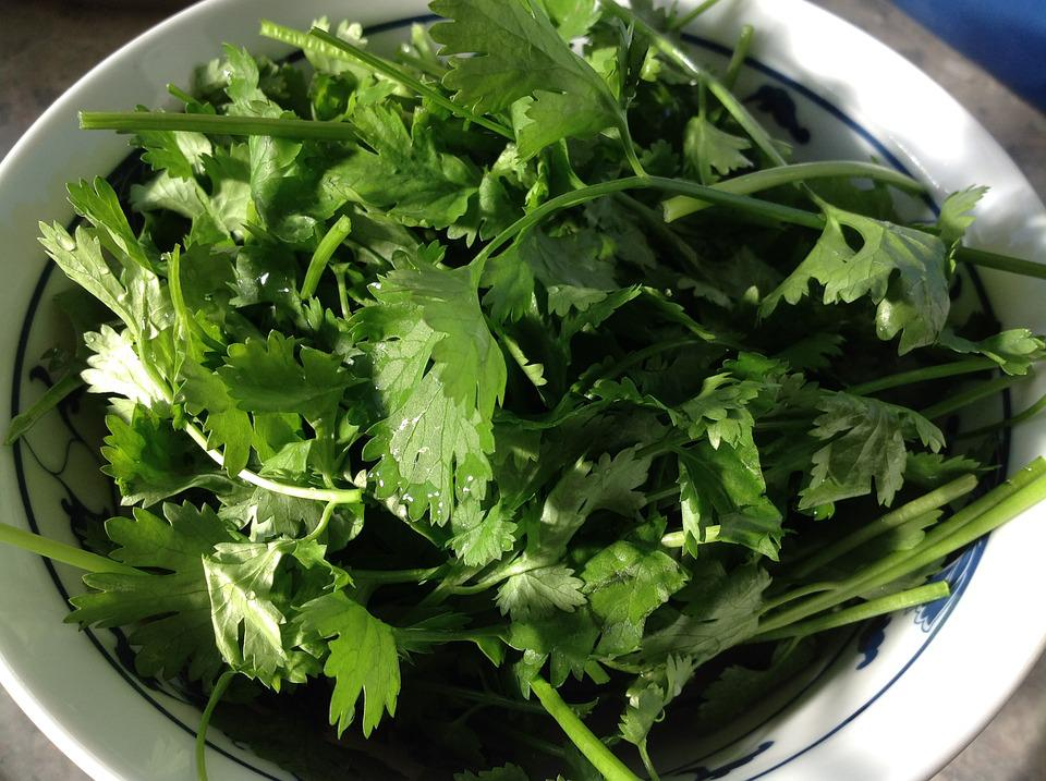 Coriander, Vegetable, Healthy